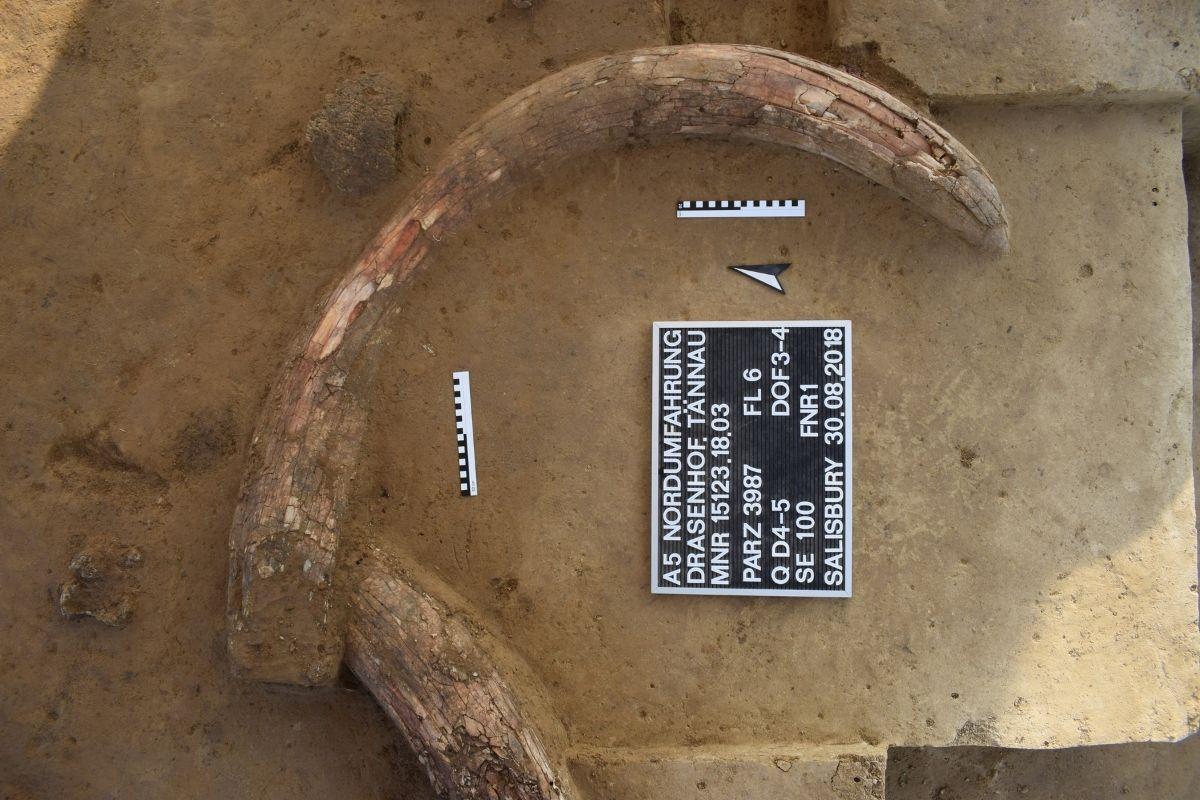 Egyedi mamutleletek Ausztriában.